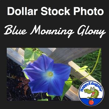 Dollar Stock Photo - Blue Morning Glory Flower