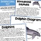 Dolphins:  Informational text, diagram, & skill pages!