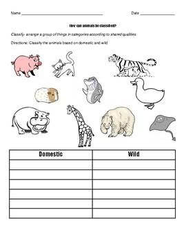 Domestic Animals vs. Wild Animals