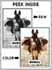 Close Reading Donkey Activities