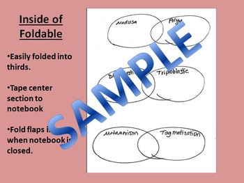 Double Bubble Vocabulary Comparisons - Zoology Invertebrate