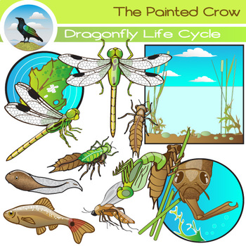 Dragonfly Life Cycle Clip Art - Insect Graphics - Bug Illu