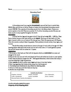 Dromedary Camel - Review Article Questions Facts Vocabular