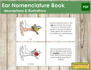 Ear Nomenclature Book (Red)