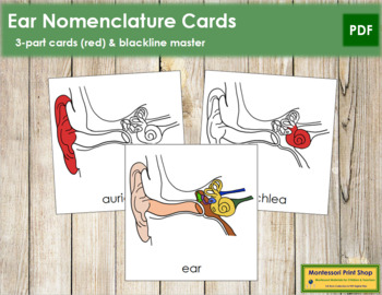 Ear Nomenclature Cards (Red)
