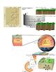 Earthquake Unit Study Guide