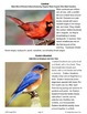Eastern States Bird Lesson and Bird Prediction Trick