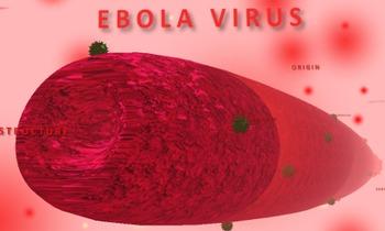 Ebola 3D