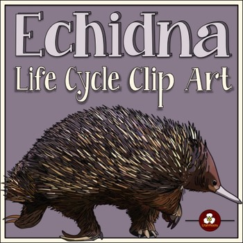 Echidna Life Cycle Clip Art