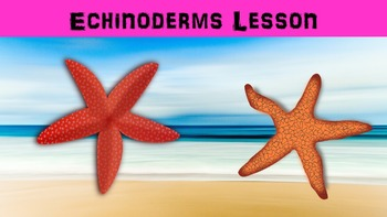 Echinoderms Lesson with Power Point, Worksheet, and Creati