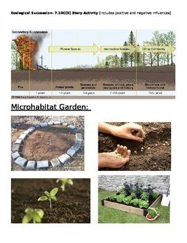 Ecological Succession- Garden