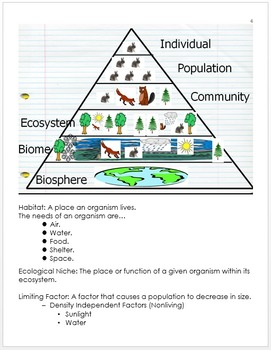 Ecology Unit Notes, Animal Interactions, Food Webs, Standa
