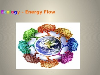 Ecology: Energy Flow