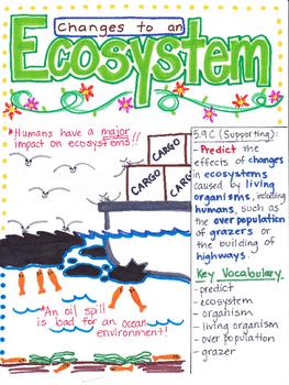 5th Grade Ecosystems