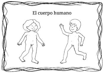 El cuerpo humano.