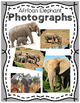 Elementary Animal Research Information- African Elephants!