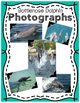 Elementary Animal Research Information- Bottlenose Dolphin!