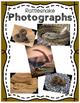 Elementary Animal Research Information- Rattlesnake!
