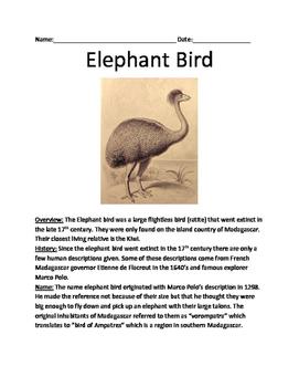 Elephant Bird - Extinct lesson review article questions fa