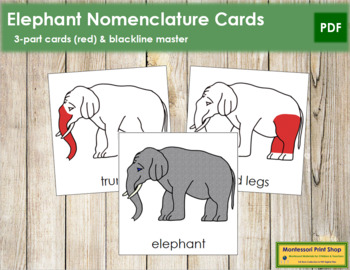 Elephant Nomenclature Cards (Red)