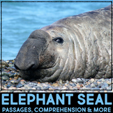 Elephant Seal: Informational Article, QR Code Research & F