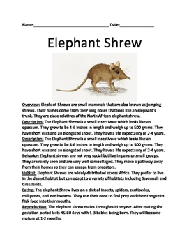 Elephant Shrew - review article lesson with questions and