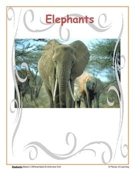 Elephants - Differentiated Blooms Enrichment Unit