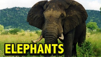 Elephants - PowerPoint