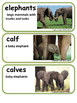 ReadyGen Elephants and Their Calves Vocabulary / 1st grade