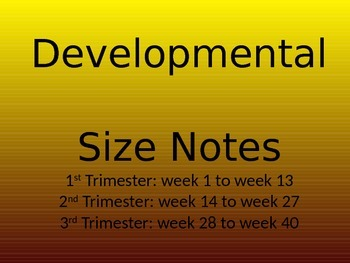 Embryo and Fetal Development Size Power Point