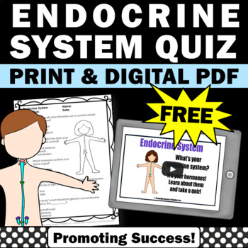 free endocrine human body activities system
