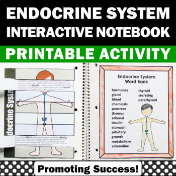 endocrine system human body 5th 6th grade
