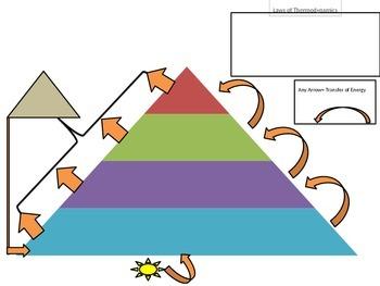 Energy Flow Through Ecosystems Notes: Laws of Thermodynami