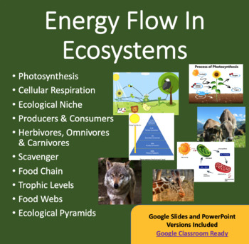 Energy Flow in Ecosystems -Ecology PowerPoint Lesson, Note