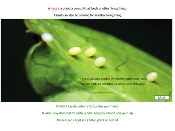 Engage NY Grade 2 ELA Listening Domain Insects : Lesson 1