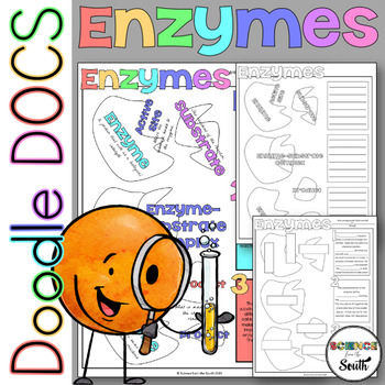 Enzymes Coloring Worksheets with 8 Differentiated Versions