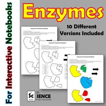 Enzymes for Interactive Notebooks Activity