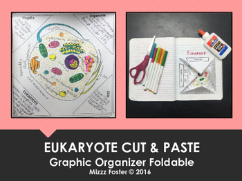 Eukaryote (complex cell) Cut & Paste One Page Graphic Orga