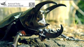 Eureka ELA Engage NY 2nd Grade Unit 8 Insects (16 powerpoints)