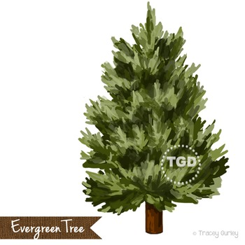 Evergreen Tree Clip Art, Hand painted clip art Printable T