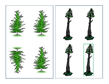 Evergreen Tree Same/Different cards