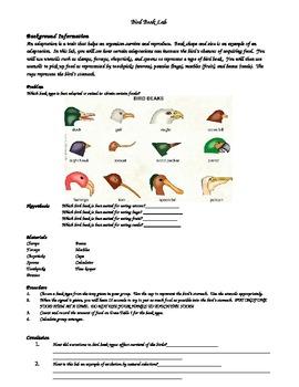 Evolution Lab Adaptation of Bird Beaks