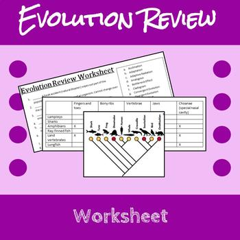 Evolution Review Worksheet