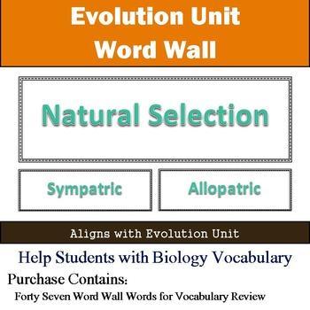 Evolution Word Wall