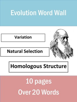 Evolution Word Wall