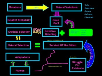 Evolution and Natural Selection vocabulary graphic organizer