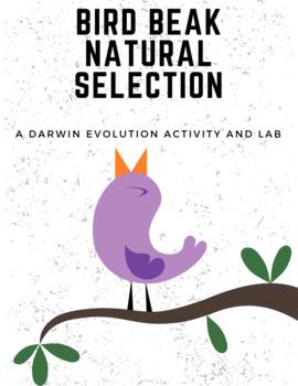 Evolution by Natural Selection: Bird Beak Adaptations