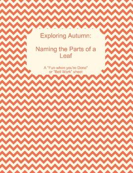 Exploring Autumn:  Parts of a Leaf