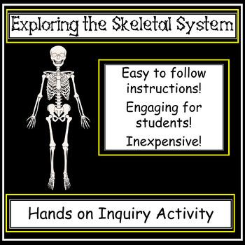 Science Anatomy - Exploring the Human Skeletal System