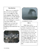 Informational Writing Unit *No Prep Printables and Editabl